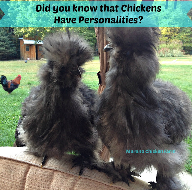 Chickens have personalities
