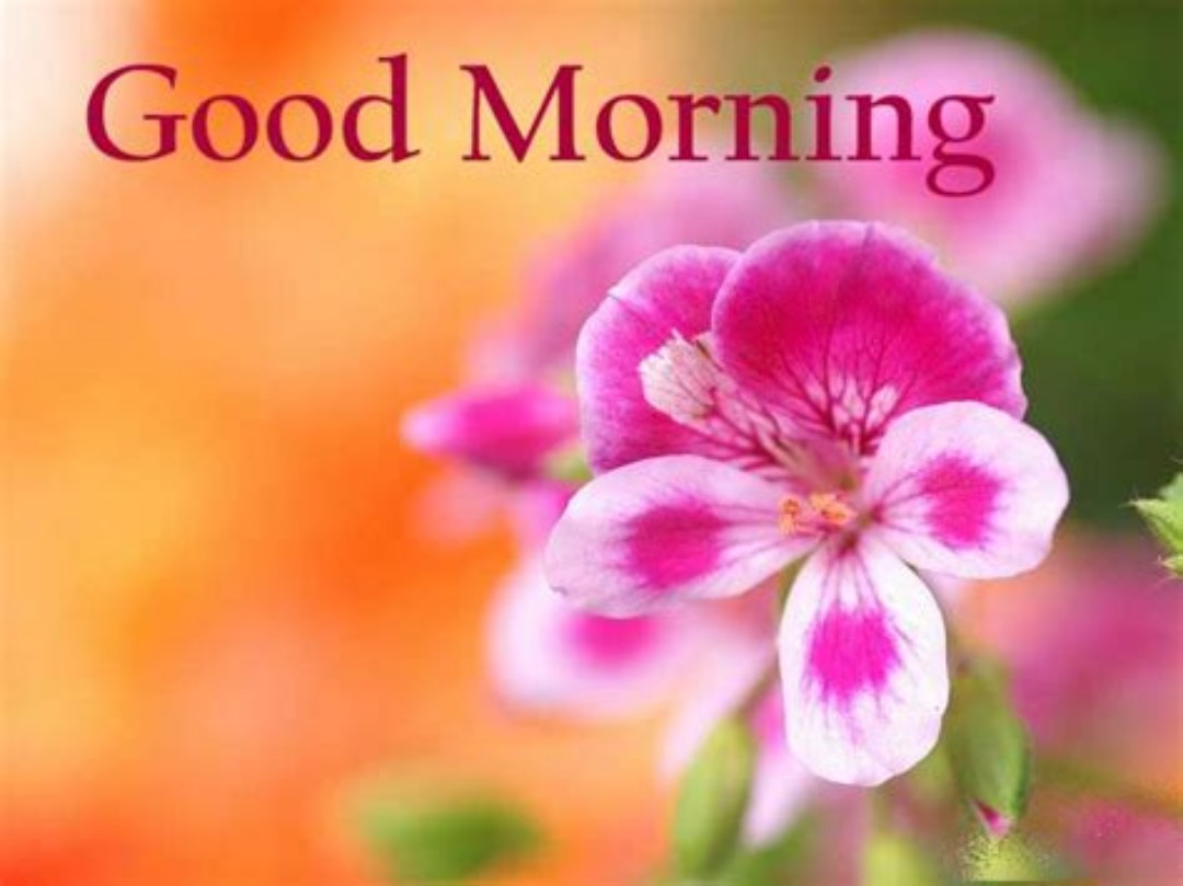 Good morning flowers images 45 wallpapers pics for dp hd good morning flowers wallpapers izmirmasajfo