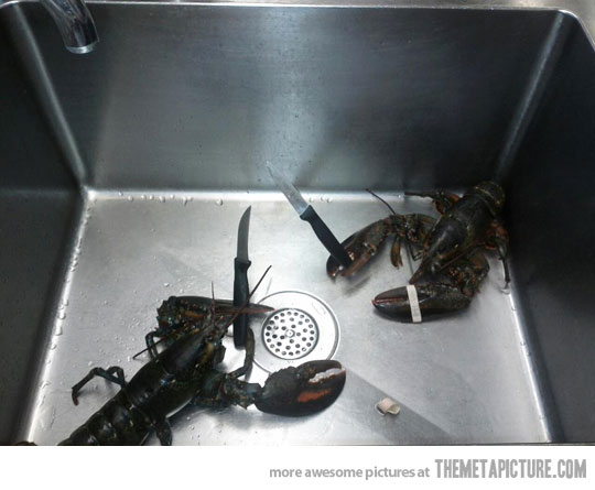 never bring a knifeto a lobster fight