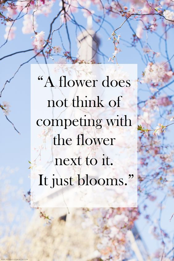 QUOTE OF THE MORNING...BLOSSOM!