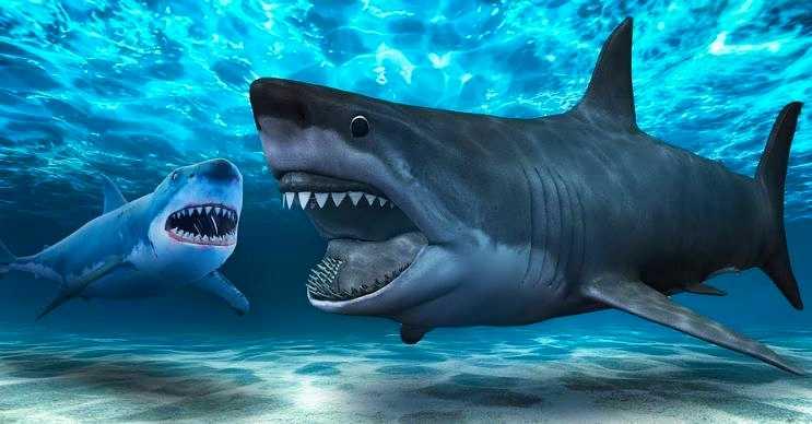 Sıradan köpek balıkları bu devasa canlılarla karşı karşıya gelmemeye çalışırdı.