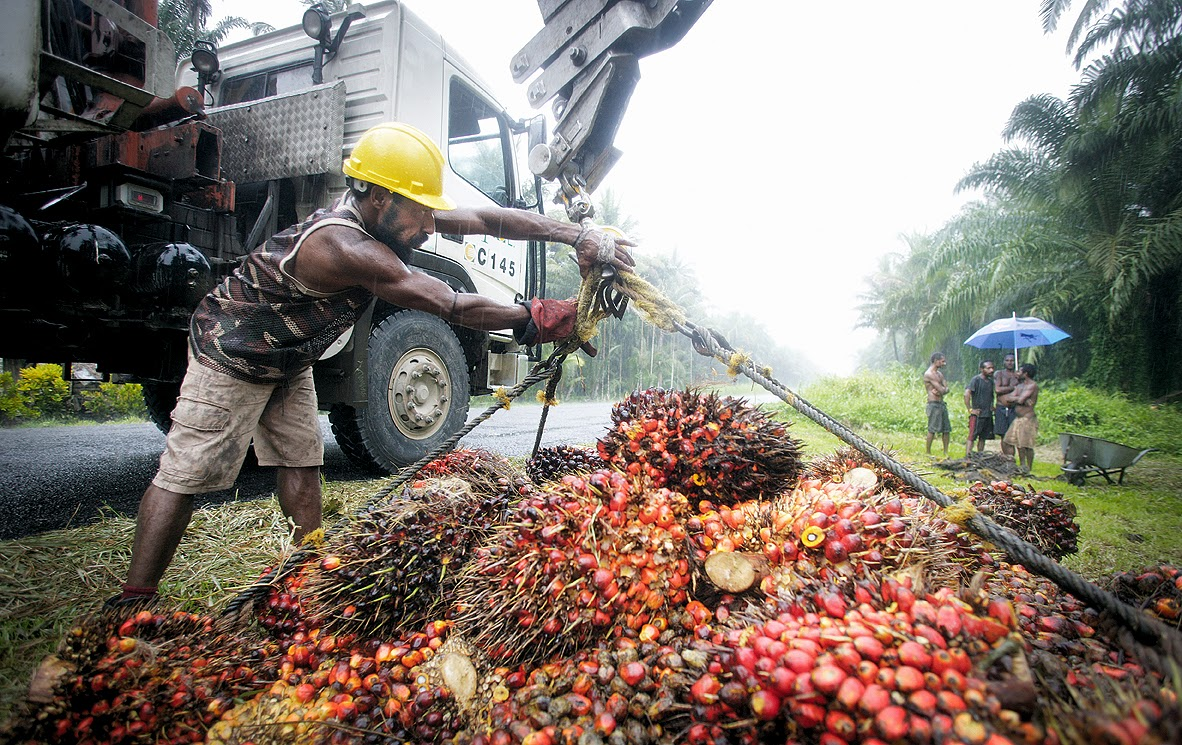 Pricey offer for NBPOL justified | MY palm oil
