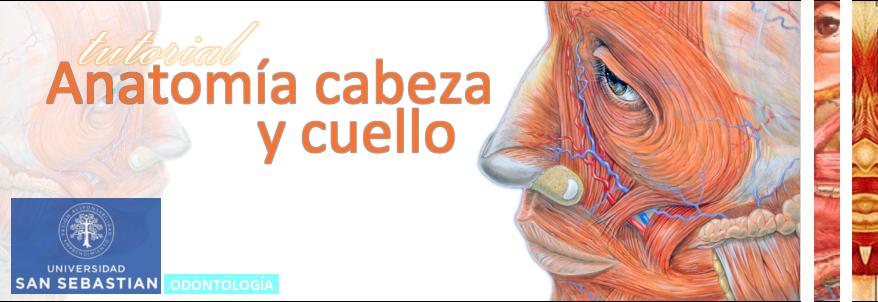 calatayud1497222 : Tutorial Anatomía Cabeza y Cuello: Región ...