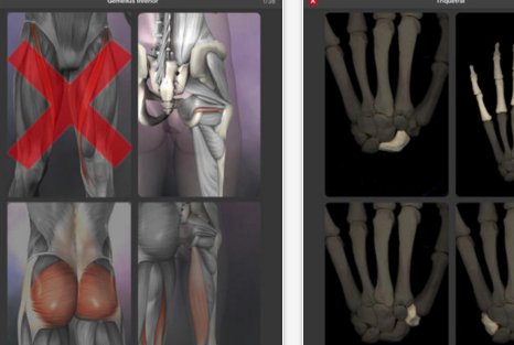 7 of The Best iPad Apps for learning Human Anatomy in 3D ...