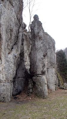 grzyby 2017, grzyby zimowe, grzyby nadrzewne, grzyby w lutym, poszukiwania wiosny, podkrakowskie dolinki, Dolina Będkowska, Sarcoscypha austriaca czarka austriacka