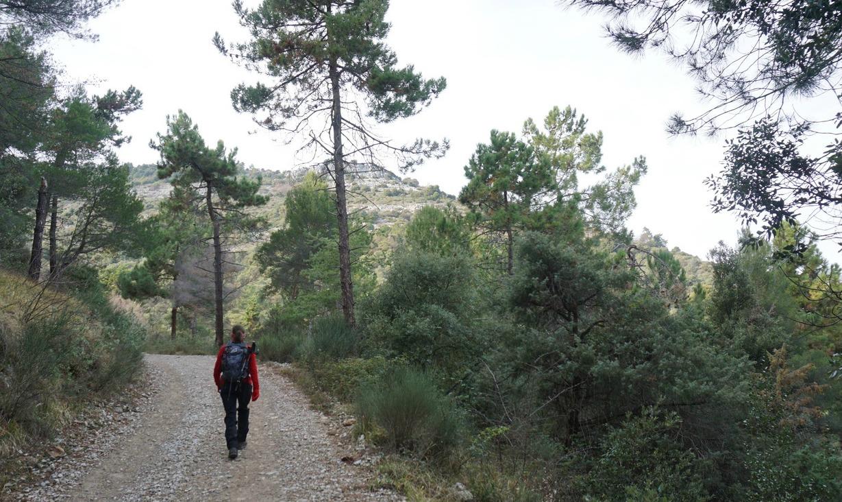 The forest road to Canal de la Graviére