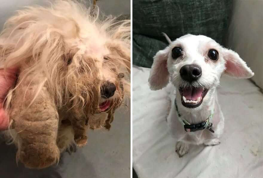 11 Adorable Before And After Dog Adoption Pictures