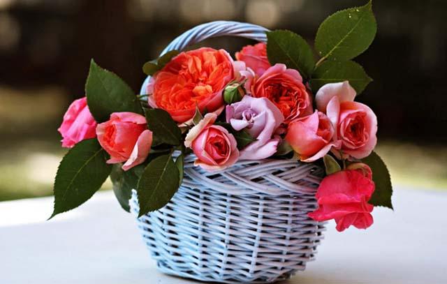 Bạn thích tặng hoa gì ngày 8 tháng 3 nào?