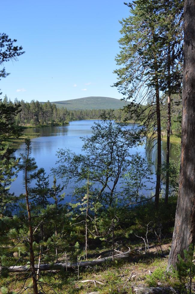 Lapin kesa, Pallas-Yllastunturin kansallispuisto
