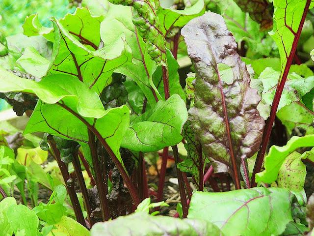 recette bio de salade d'orge et de légumes rôtis - le carnet sur l'étagère