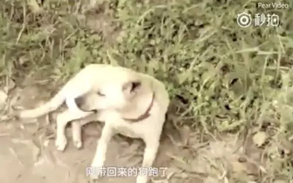 Dog Saved A Newborn Baby After Finding Out Where The Baby Was Buried Alive!