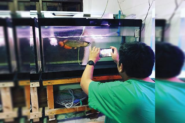 5 Trik Rahasia Saat Mendokumentasikan Ikan Bagi Pemula