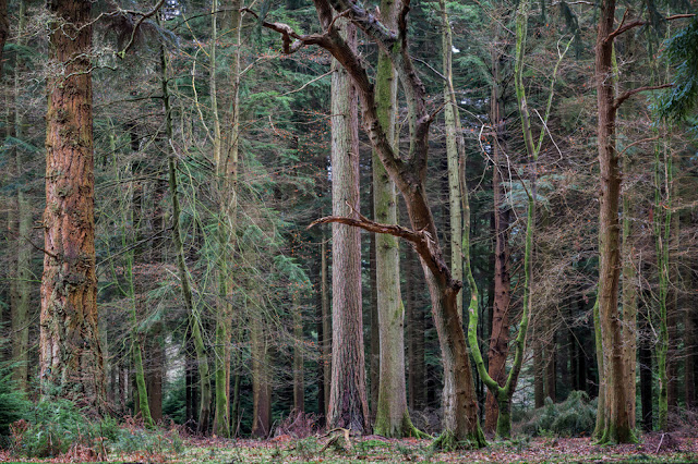 Different varieties of trees in the New Forest National Park in Hampshire