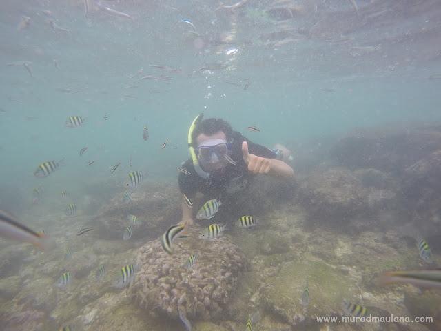 Saya Snorkeling di Pantai Nglambor 8