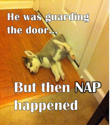 Dog humor : I was guarding the door...