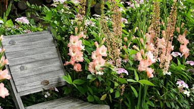 Gladiolos en el jardín