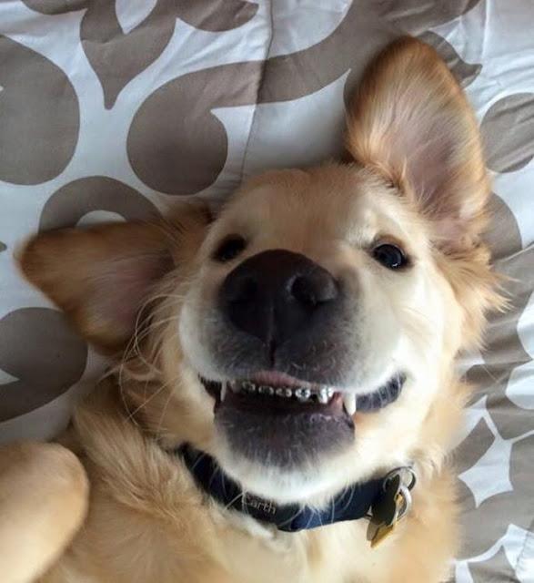 ¿Por qué este cachorro utiliza frenos dentales? Ésta es la razón