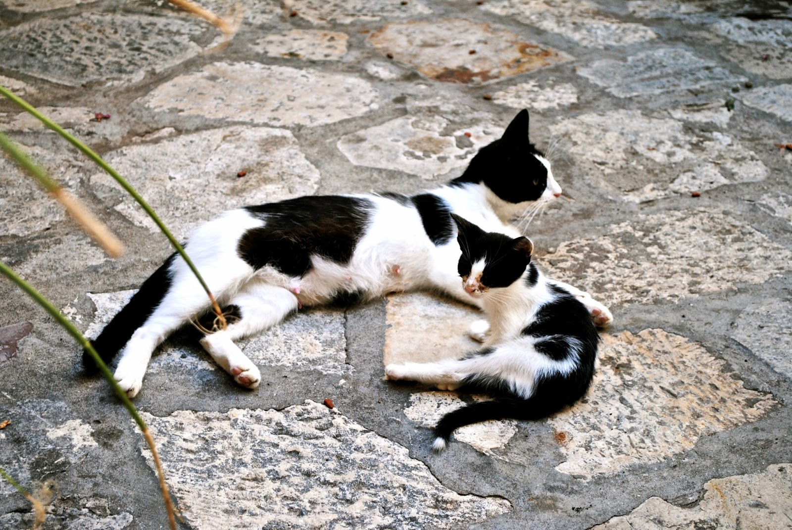 Cats in Dubrovnik Croatia