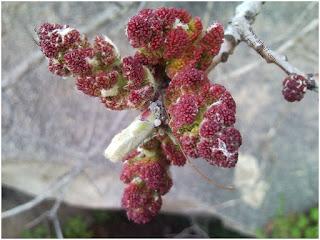 تقرير بالصور(1) عن بعض النباتات التي يزدان بها الجبل وخصوصا وقت الأمطار