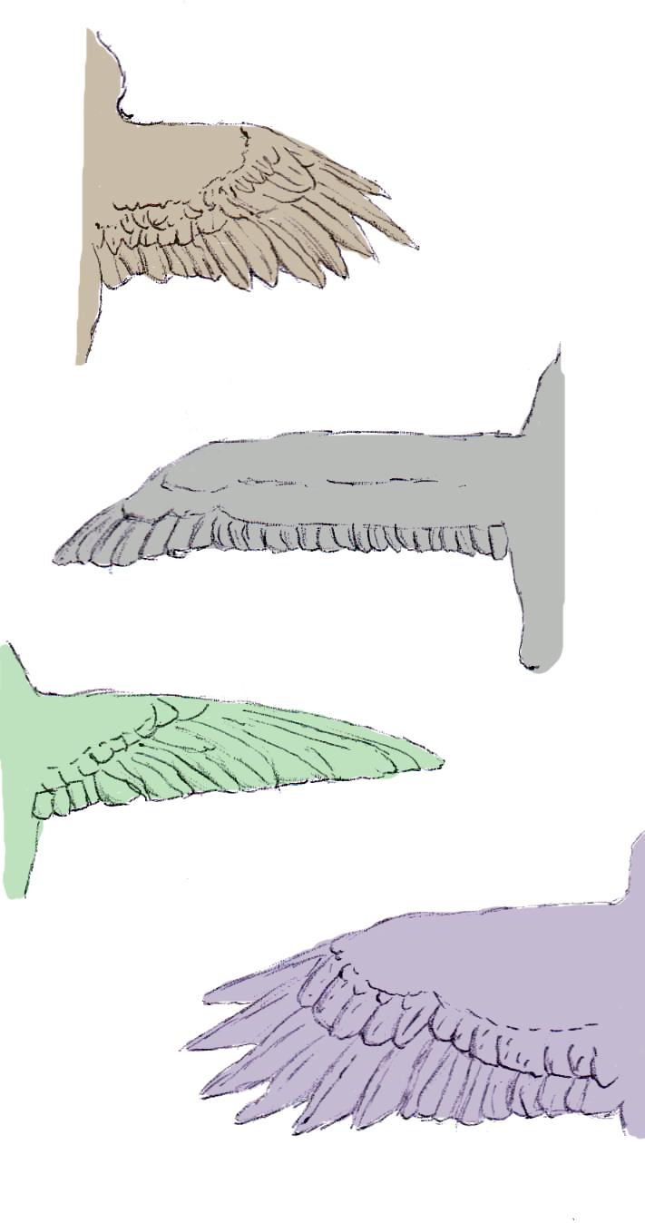 Aves de Argentina: Anatomía de un ave