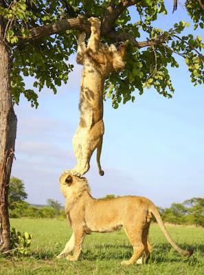 amistad entre leonas