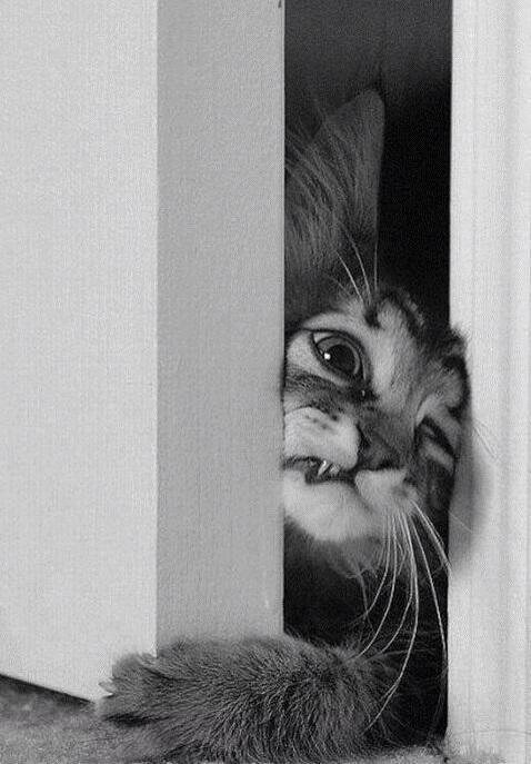 gatto-che-cerca-di-aprire-una-porta