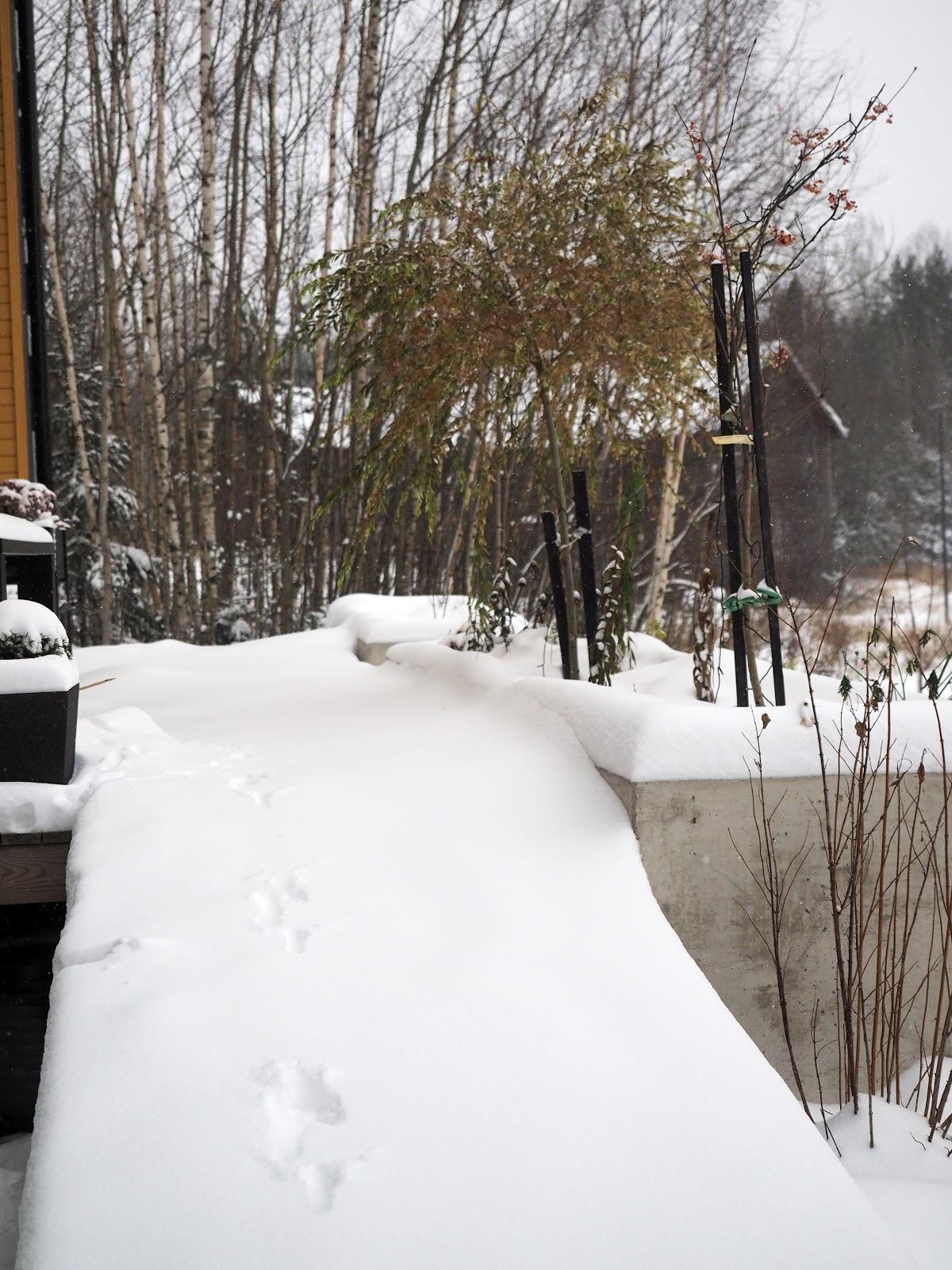 Lunta terassilla, lumi, maisema, marraskuu, talvi