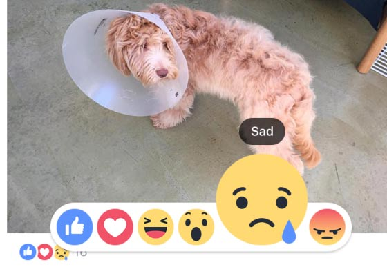 Facebook Menambahkan Tombol Love-Haha-Wow-Sad-Angry