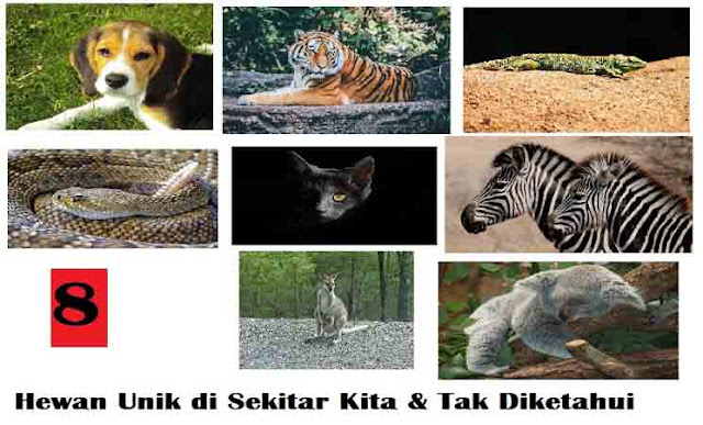 53+ Gambar Hewan Dan Ciri Khasnya Gratis