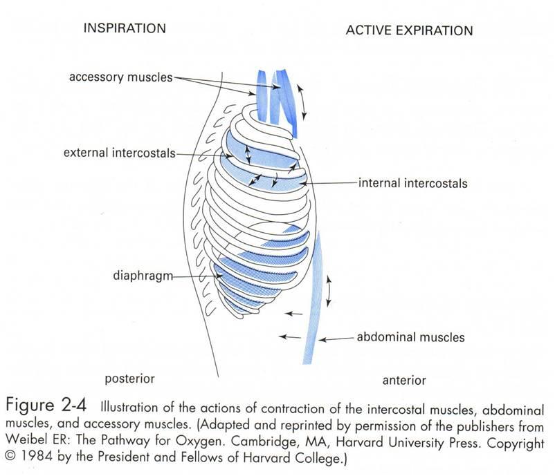 General Medicine: August 2011