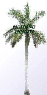 Palm raja | Jasa Tukang Taman Surabaya