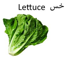 خس : Lettuce