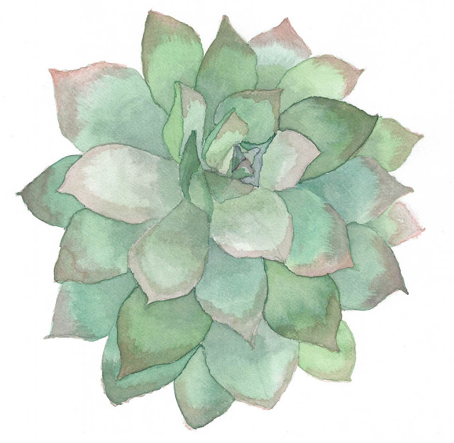 Watercolor Succulent Painting by Thistle Thicket Studio. www.thistlethicketstudio.com