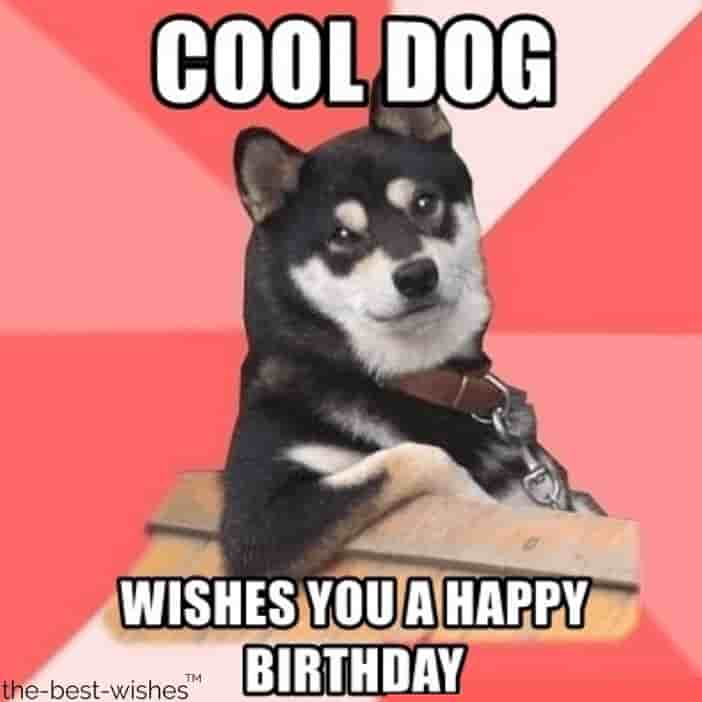 animal memes with cool dog wishes you a happy birthday