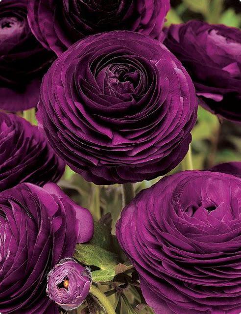 blog-decoração-jardinagem