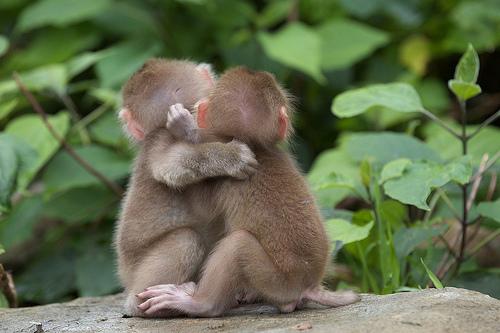 love animals monkey in - photo #21