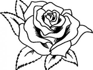 Imagenes De Flores Mas Hermosas Del Mundo Imagenes De Flores Para