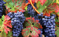 Autumn Grapes Puzzle