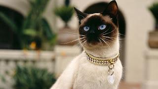 Советы о том как сделать жизнь вашего кота счастливее
