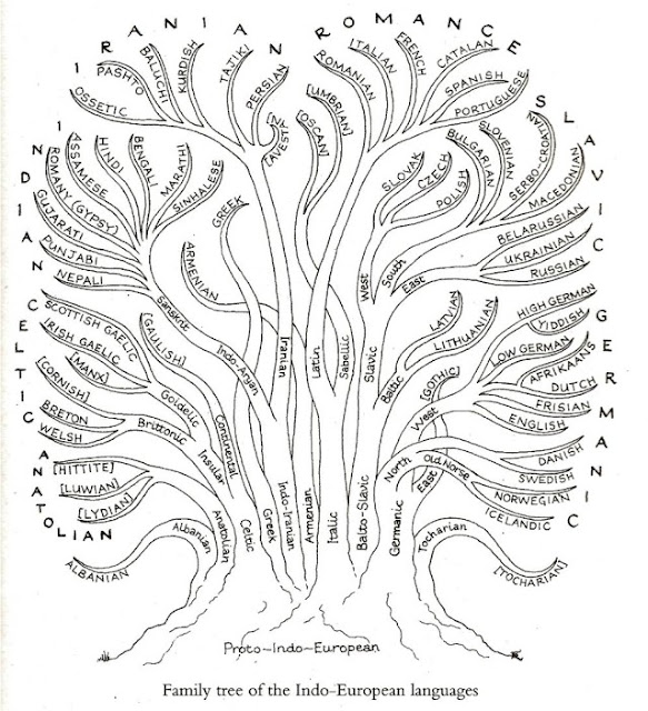A tree that shows the roots and development  of the family of Indo-European languages