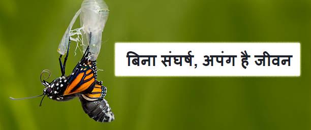 Butterfly Struggle Story