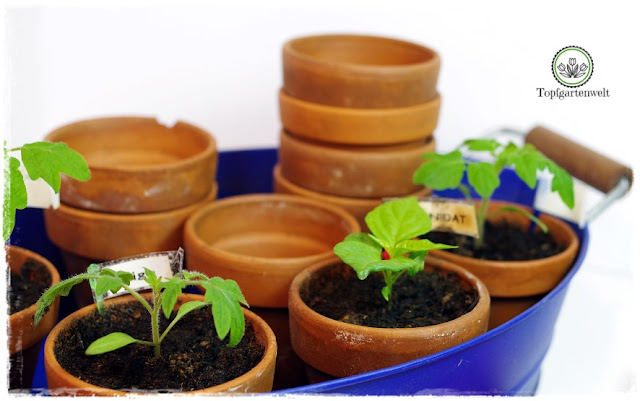Gartenblog Topfgartenwelt Aussaat Anzucht Grow-Box: Jungpflanzen brauchen gute Erde um wachsen zu können
