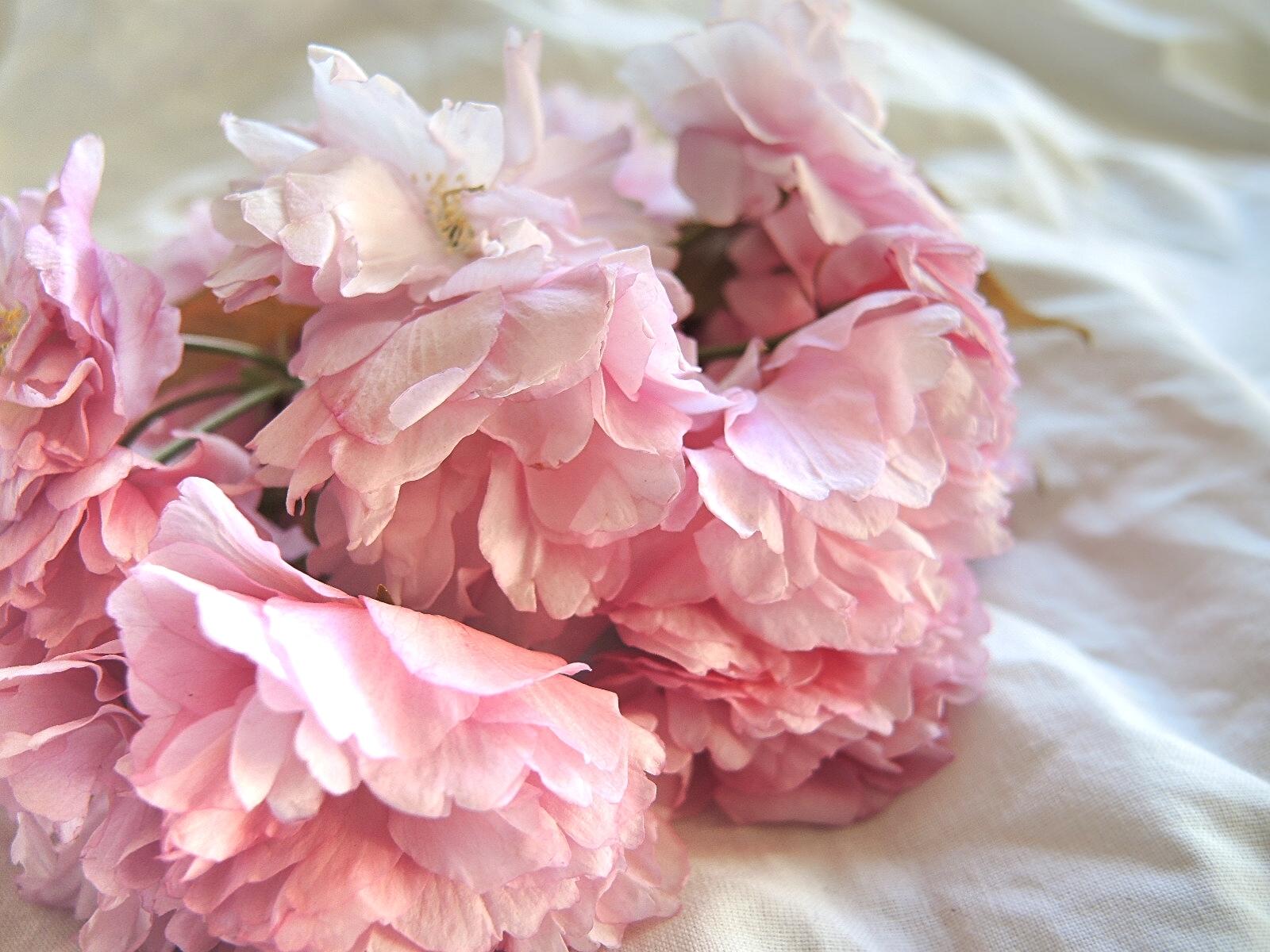Moois van ' m(i)e': roze wolkjes a volonté