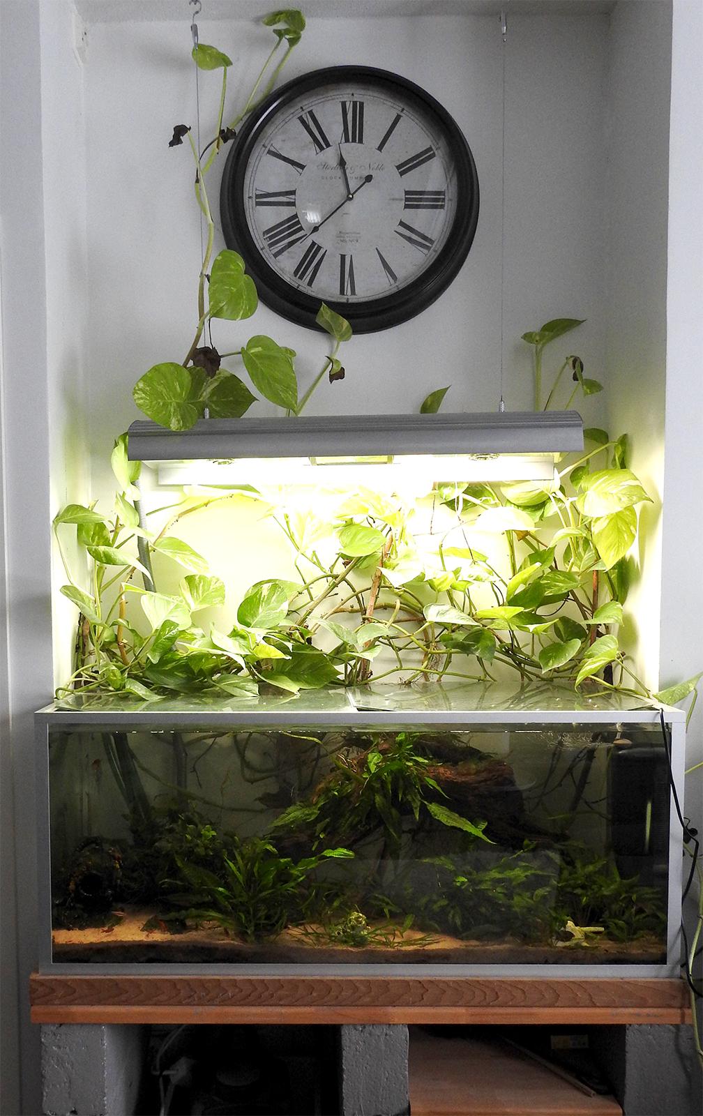 akvaario olohuoneen katseenvangitsijana