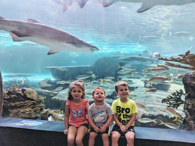 Gatlinburg, vacation, travel, family fun, to do with kids, Gatlinburg attraction, Ripley's Aquarium, Ripley's Aquarium Gatlinburg, Gatlinburg TN, Tennessee, fish, aquarium, tourist attraction, Gatlinburg with kids, shark tunnel