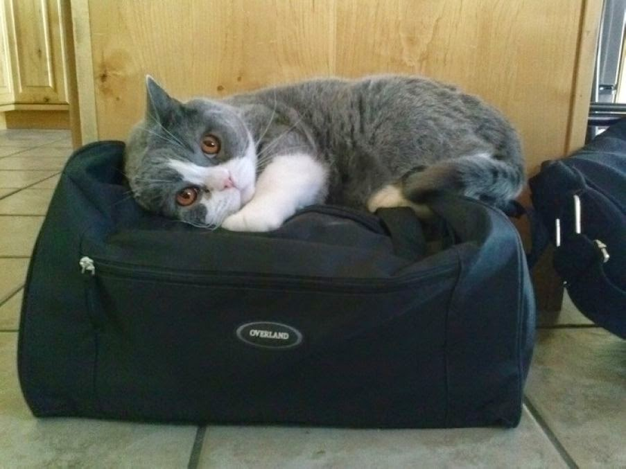 Animals Who Want to travel More Than Their Owners