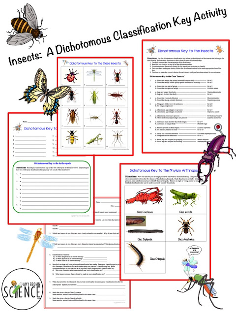 amy brown science insects a dichotomous classification key activity. Black Bedroom Furniture Sets. Home Design Ideas