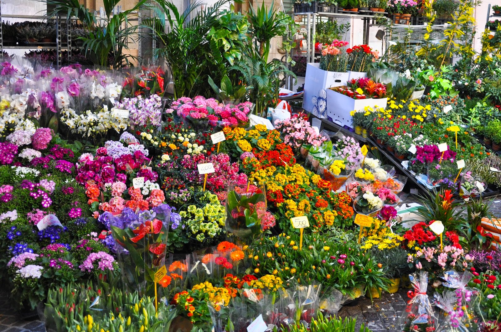 The garden stall at the Thursday market in Vicenza, Italy-2