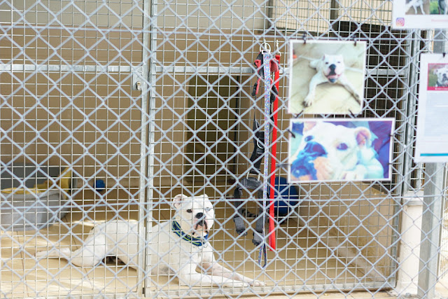イギリス シェルター 保護犬