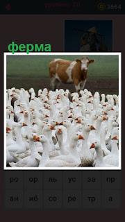 стоит корова, впереди которой много гусей на ферме